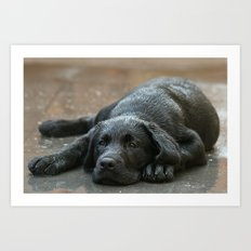 Labrador dog in the rain ! Art Print