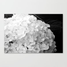 White flowers no.2 Canvas Print