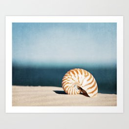 Seashell on Beach Photography, Nautilus Shell Coastal Photograph, Blue Orange Beach Landscape Art Print