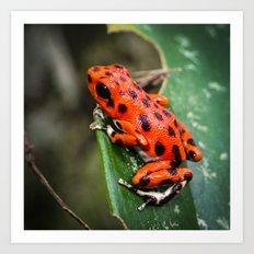 Red Frog Art Print