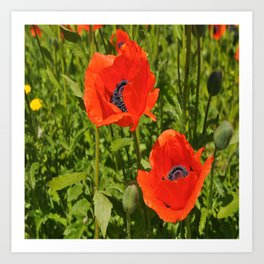 poppies nature Art Print