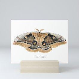 Oculea Silkmoth (Antheraea oculea) Mini Art Print
