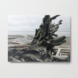 Driftwood on the Pacific Coast Metal Print