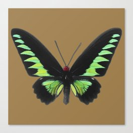 Rajah Brooke Birdwing Canvas Print