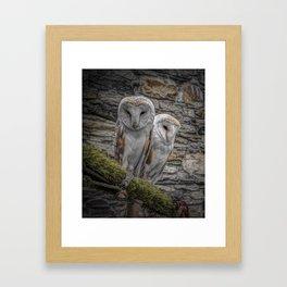 Barn owls in conwy Framed Art Print