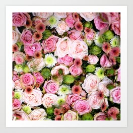 Bed of Roses Pink White Art Print