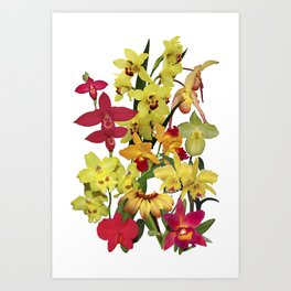Orchids - Hot Colors! On white Art Print