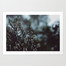 like winter Art Print