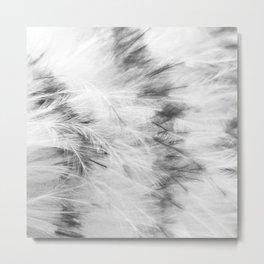 Marabou Feathers Metal Print