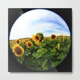 Sunflower 23 Metal Print