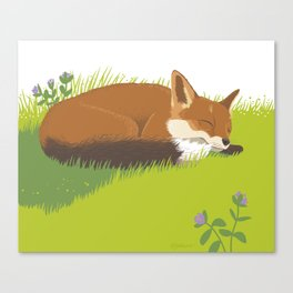 Snoozy Red Fox Canvas Print