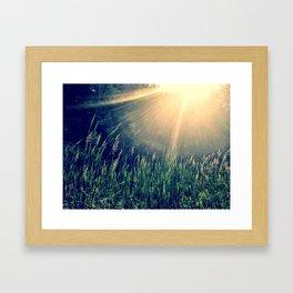 Late July Framed Art Print