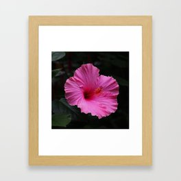 Hibiscus at Eden Project Framed Art Print