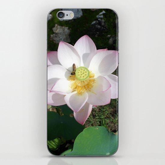 Lotus 1 iPhone & iPod Skin