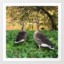 Birds in London Art Print