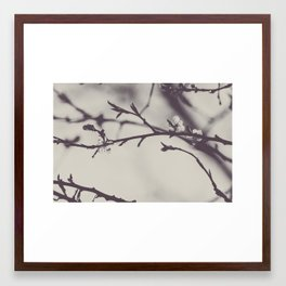 Atmospheric blooming plum tree branches in matte monochrome; modern simple black and white photo Framed Art Print