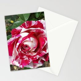 A Red and White Rose Stationery Cards