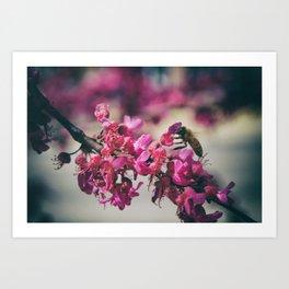 a redbud bee Art Print