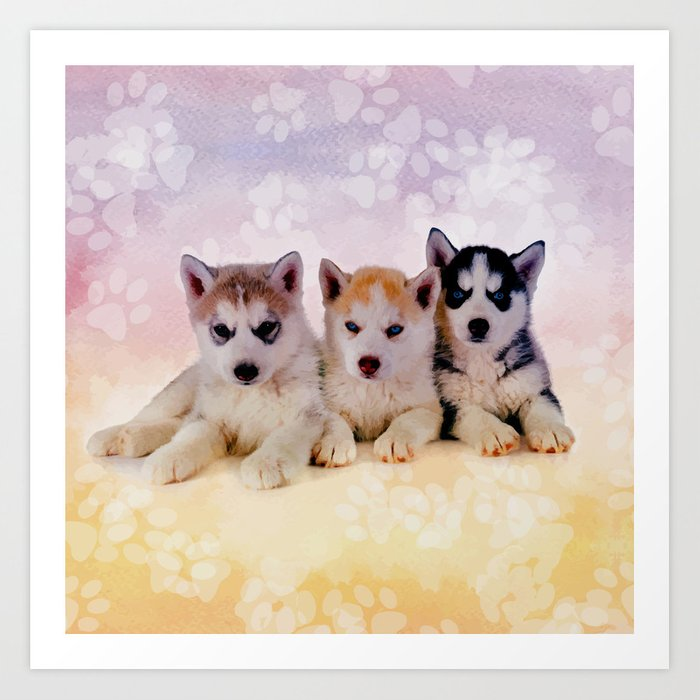 Siberian Husky Puppies Art Print By
