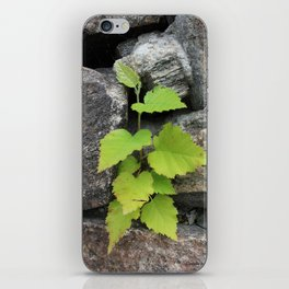 Little plant iPhone Skin