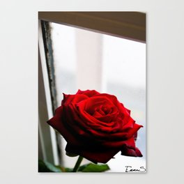 Rose of Valentine's day 2 Canvas Print