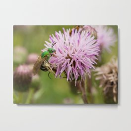 Green Bee on a Thistle Metal Print