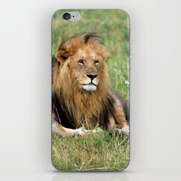 Male Lion On The Masai Mara iPhone Skin