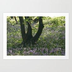 Wild Bluebells in ancient woodland. Wayland Wood, Norfolk, UK. Art Print