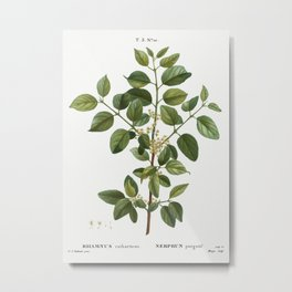 Common buckthorn, Rhamnus catharticus from Traité des Arbres et Arbustes que l'on cultive en France Metal Print