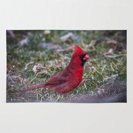 Male Red Cardinal Ohio Rug