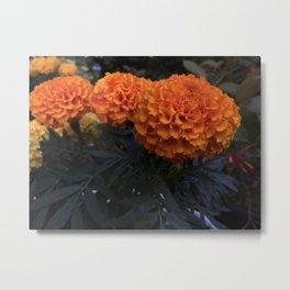 Marigolds 2 Metal Print