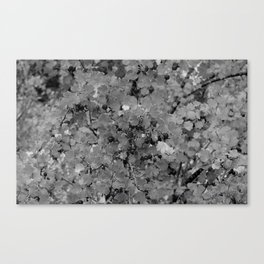 Berries in Black and White Canvas Print
