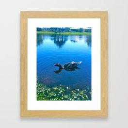 Duck SWIMMIN  Framed Art Print