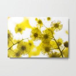 Acacia Flower V Metal Print