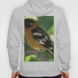 Blackheaded Grossbeak Hoody