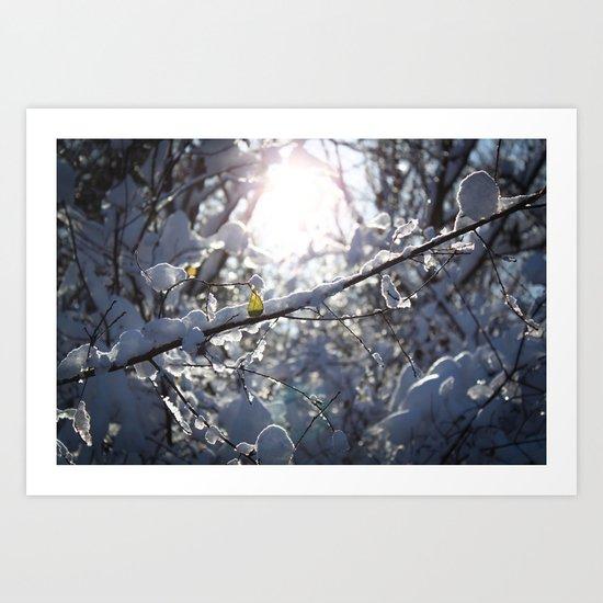 Iced Light Art Print