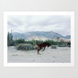Bucking in Baja Art Print