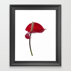Anthurium - 2 Framed Art Print