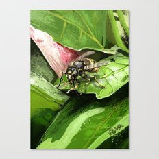 Wasp on flower16 Canvas Print