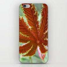 Red Leaf iPhone & iPod Skin