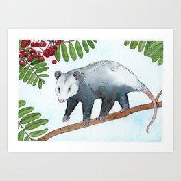 Opossum in a Rowan Tree Art Print