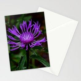 Summer Knapweed Stationery Cards