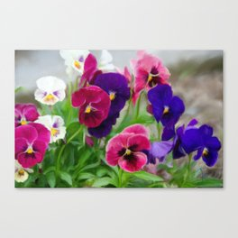 Grandmother's pansies Canvas Print