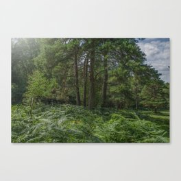 The New Forrest Canvas Print