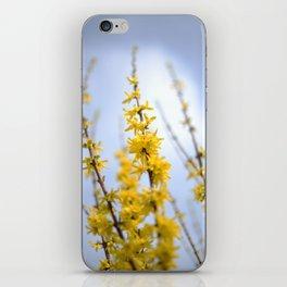Yellow flowers reaching iPhone Skin