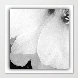 Flower   Flowers   White Petals   Macro Nature Canvas Print