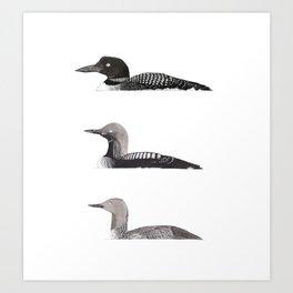 Loons Art Print