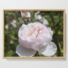 Pink Cabbage Rose Serving Tray