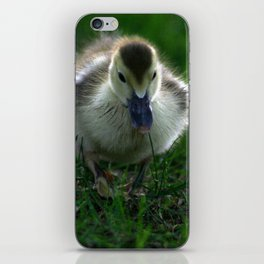 Cute Duckling Walking on a Lawn iPhone Skin