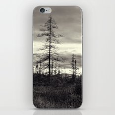 trees in a marsh iPhone & iPod Skin